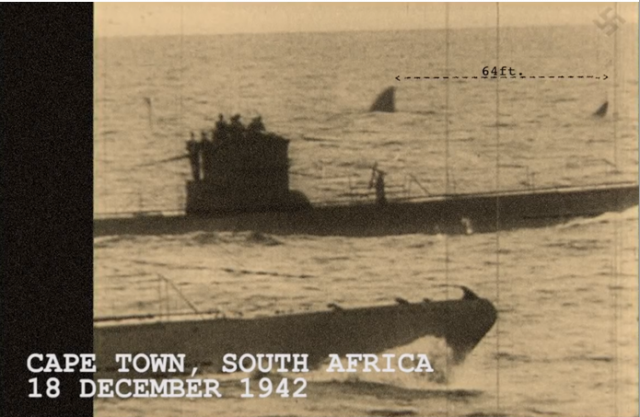 Megalodon Sighting During World War II [Hoax]